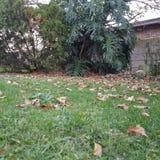 automne de chute Images stock