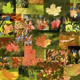 automne de collage Photographie stock