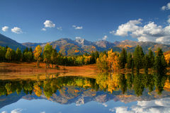 automne de couleurs Images libres de droits