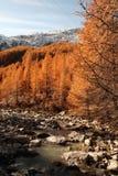 Automne de forêt d'honoraires de Saas Images libres de droits