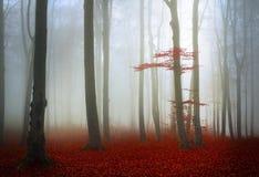 Automne de forêt de vieille galoche image stock