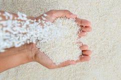 Automne de grains de riz Images stock