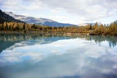 Automne de l'Alaska - Aspen Reflection dans l'eau photos libres de droits