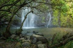 Automne de l'eau dans la forêt Photo libre de droits