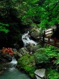 Automne de l'eau de forêt Photo libre de droits
