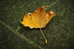 Automne de lame d'automne Photographie stock libre de droits