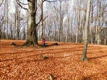 Automne de lame d'automne image libre de droits
