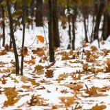 Automne de lame d'automne Feuilles et branches d'arbre sur la neige Images libres de droits