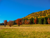 Automne de montagne Photo stock