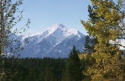 Automne de montagne rocheuse. Image libre de droits
