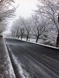 Automne de neige Photo stock