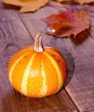 Automne de potiron de thanksgiving Image libre de droits