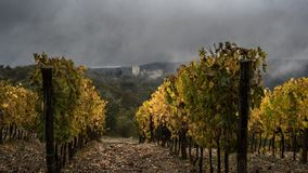 Automne de vignobles du ` s de Vertine photo stock