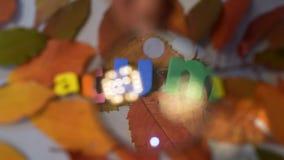 Automne de Word par la loupe Lettre colorée sur les feuilles jaunes clips vidéos