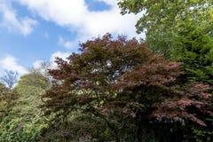 Automne en Angleterre Photo stock