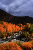 Automne en bois 2 de fleuve Photo stock