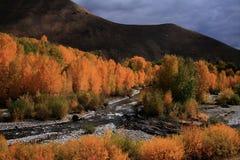 Automne en bois de fleuve Images libres de droits