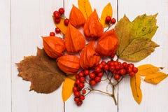 Automne en gros plan et composition de fête des feuilles, physalis, sorbe sur un fond en bois blanc Automne, concepts de Hallowee photo libre de droits
