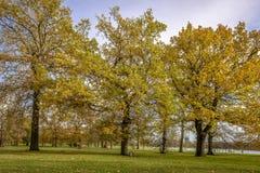 Automne en Hyde Park, Londres Image libre de droits