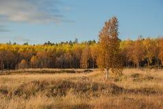 Automne en Laponie Images libres de droits