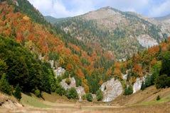 Automne en montagnes carpathiennes   Photographie stock libre de droits