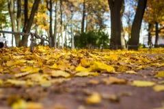 Automne en parc Photo libre de droits