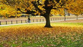 Automne en parc Image libre de droits