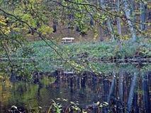 Automne en parc Image stock