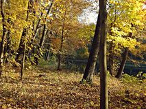 Automne en parc Photo stock