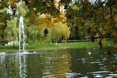 Automne en parc avec le lac Photo libre de droits