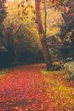 Automne en parc de Goldsworth dans Woking Image libre de droits