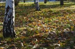 Automne en parc de ville Photo libre de droits