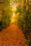Automne en parc Woking de Goldsworth photographie stock libre de droits