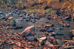 Automne en rivière d'Extrême-Orient de forêt russe photo stock