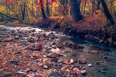 Automne en rivière d'Extrême-Orient de forêt russe photographie stock libre de droits