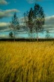 Automne en Russie centrale Photo stock