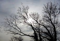 Automne et arbre photo libre de droits