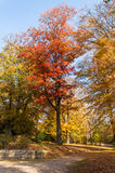 Automne et couleurs lumineuses Arbre forestier de conte de fées d'automne Images libres de droits
