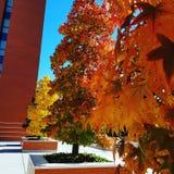 automne et feuilles colorées photos stock