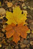 Automne et feuilles colorées au sol photo stock