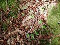 Automne, feuilles de brun images libres de droits