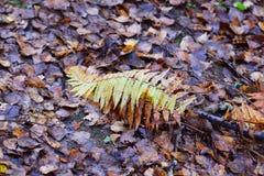 Automne : feuilles fanées très intéressantes Image libre de droits
