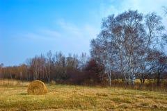 Automne field-2 de secteur. Photographie stock