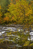 Automne, fleuve de Tellico, N-F cherokee image stock