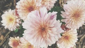 Automne floral Image stock