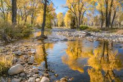 Automne grand de parc national de Teton Photo stock