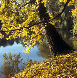 Automne jaune Photos stock