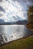 Automne jaune de feuilles au lac Bled en Slovénie en vue d'île photos libres de droits