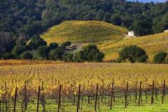 Automne jaune Napa de vignes de côtes de vignes Images stock