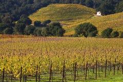 Automne jaune Napa de vignes de lames de vignes Photo stock